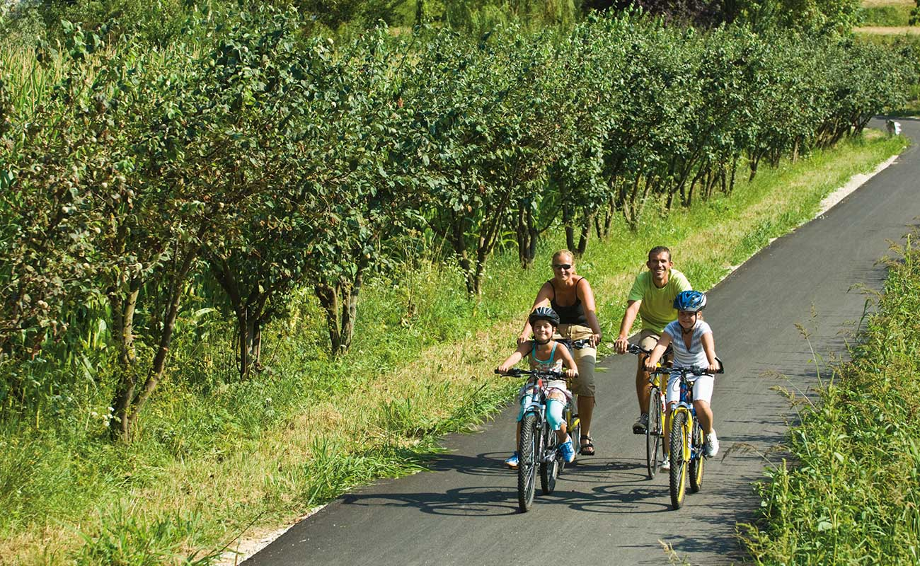 Family biking surrounded by fruit trees